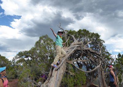 Kerry climbing the tree triumphant